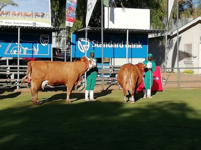 National Cattle Breed competition